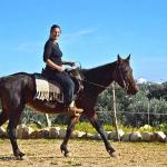 Maneggio-cavalli-agriturismo-BnB-Riposo-del-Vento-Trulli-Cisternino-(Brindisi)