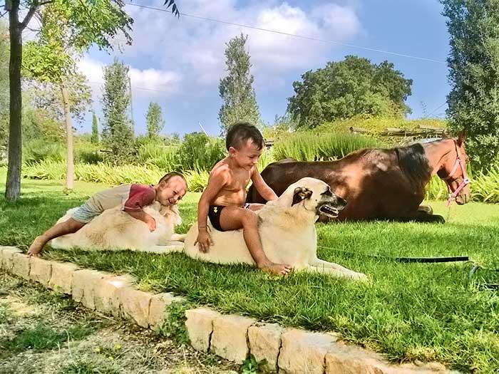 cani-cavalli-bambini