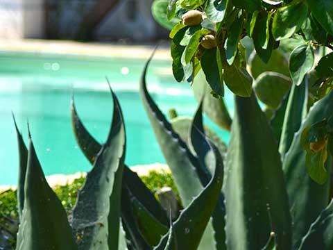 natura-incontaminata-nel-girdino-piscina-BB-Riposo-del-Vento
