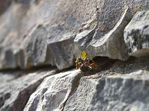 natura-libera-tra-le-pietre-dei-trulli-a-Cisternino