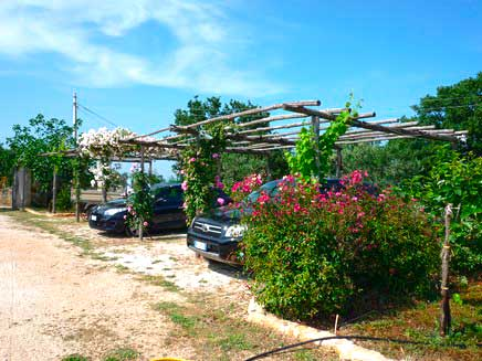 Parcheggio auto coperto da pergola in fiore