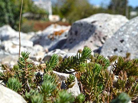 piante-grasse-nel-giardino-roccioso-del-bed-and-breskfast