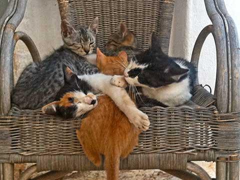 vacanze-cani-e-gatti-puglia