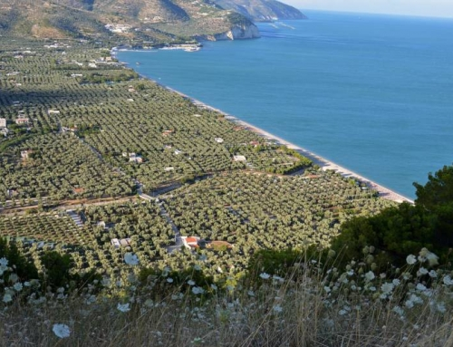 Il bel mare e la costa pugliesi
